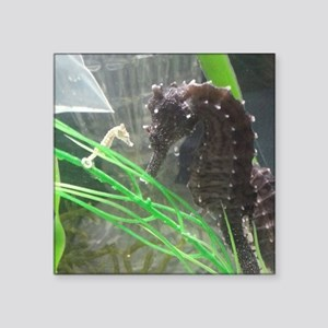 "I see you! Erectus seahorse Square Sticker 3"" x 3"""