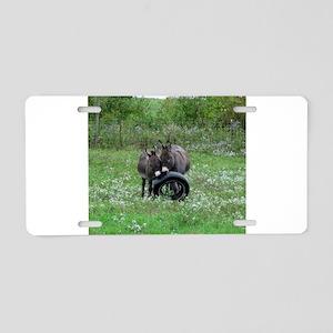 Miniature donkeys playing w Aluminum License Plate