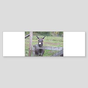 Miniature Donkey II Bumper Sticker