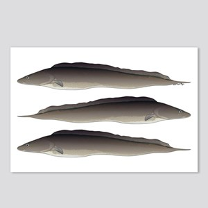 Aba African Knifefish Postcards (Package of 8)