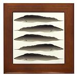 Aba African Knifefish Framed Tile