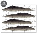 Aba African Knifefish Puzzle