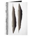 Aba African Knifefish Journal