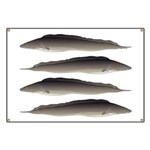 Aba African Knifefish Banner