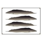 Aba African Knifefish Banner