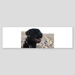 Black Lab Bumper Sticker