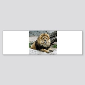 Lion_2014_1001 Bumper Sticker