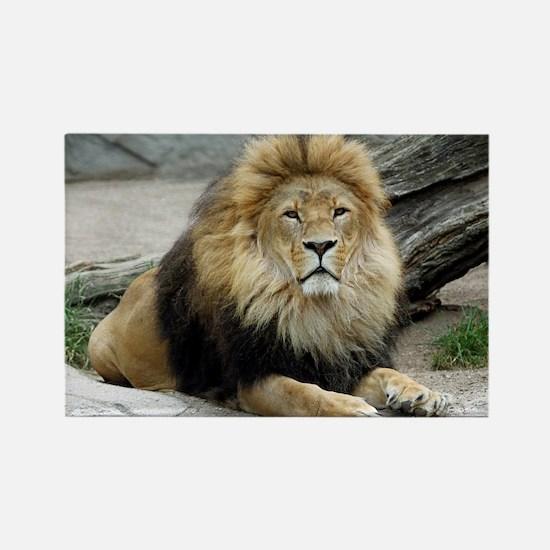 Lion_2014_1001 Magnets