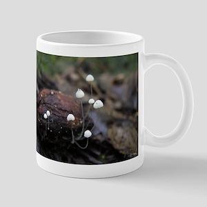 Marasmius capillaris Mug