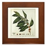 Coffee Botanical Print Framed Tile