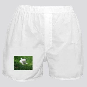 bolognese laying in grass Boxer Shorts