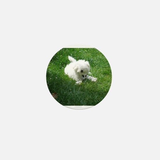 bolognese laying in grass Mini Button