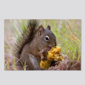Happy Squirrel & Prized M Postcards (Package of 8)