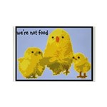We're Not Food: Chickens Rectangle Magnet (10 pack