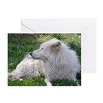 White Wolf Greeting Cards (Pk of 10)