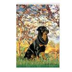 Spring / Rottweiler Postcards (Package of 8)