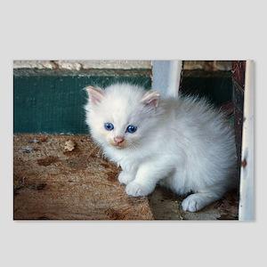 White Kitten Postcards (Package of 8)