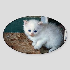 White Kitten Sticker