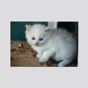 White Kitten Magnets