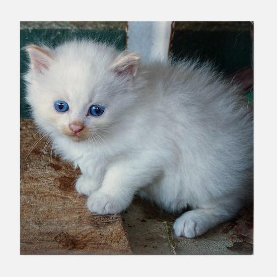 White Kitten Tile Coaster