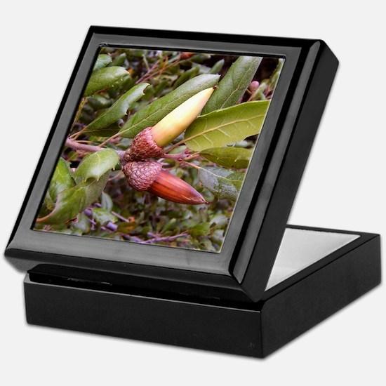 Live Oak Acorns Keepsake Box