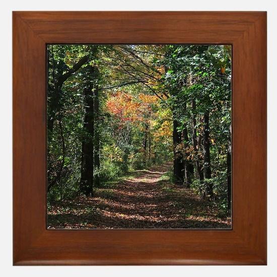 Forest trail Framed Tile