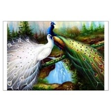 Two Peacocks Large Poster