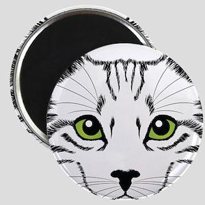 Best Cat Magnets