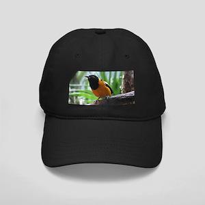 Not Sure What Bird Black Cap