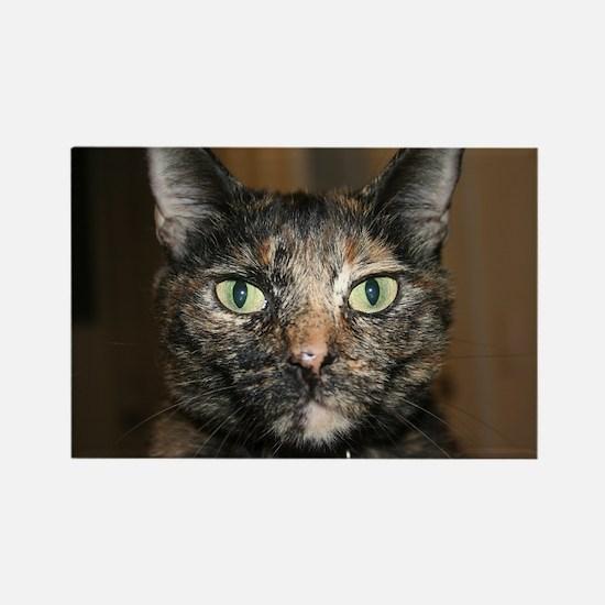 Tortoiseshell Cat Rectangle Magnet