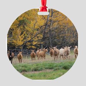 Autumn Guernseys Round Ornament