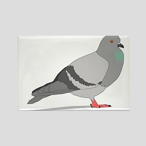 Cartoon Pigeon Magnets