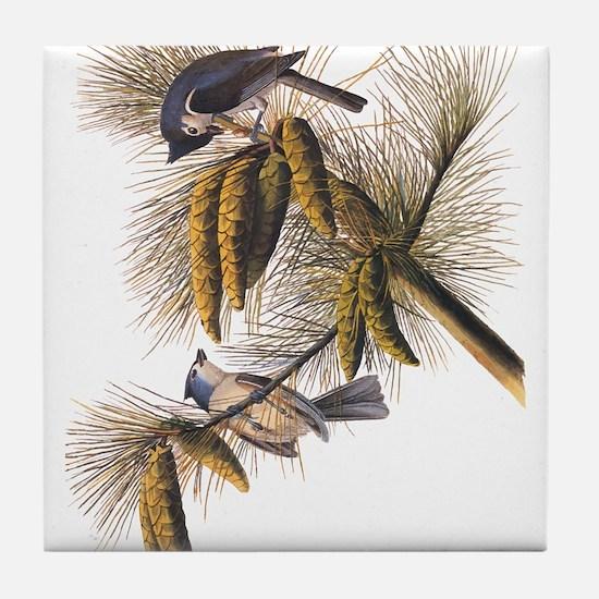 Audubon Crested Titmouse Tile Coaster