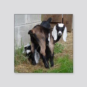 "Nubian Doeling Square Sticker 3"" x 3"""