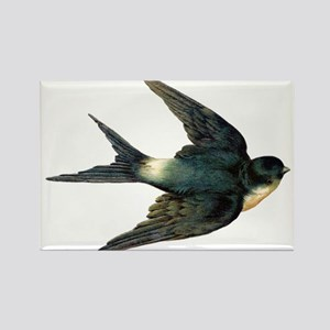Vintage Swallow Bird Art Magnets