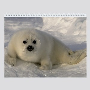 Baby Seal Wall Calendar