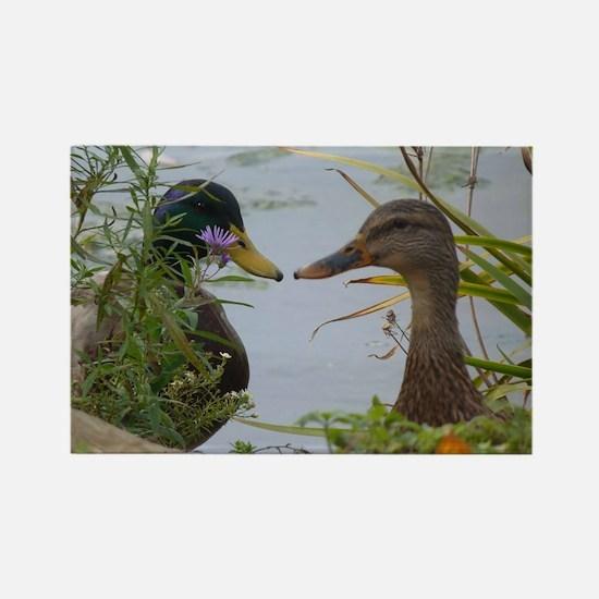 ducks Magnets