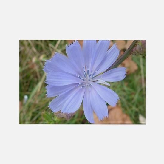 blue flower Magnets