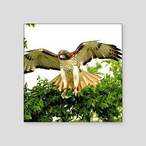 """Texas Red Tail Hawk Square Sticker 3"""" x 3"""""""