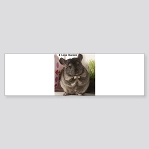 Chinchilla raisins Bumper Sticker