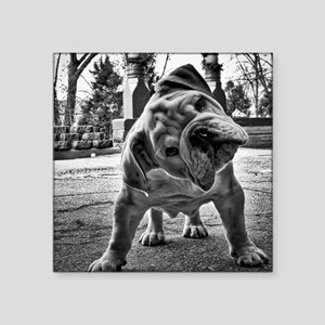 "Dudley English Bulldog Square Sticker 3"" x 3"""
