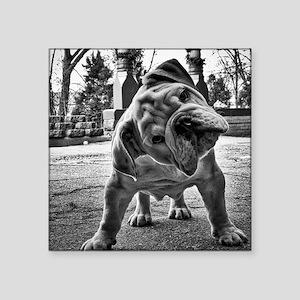 "Dudley English Bulldog Square Sticker 3"" x 3"""