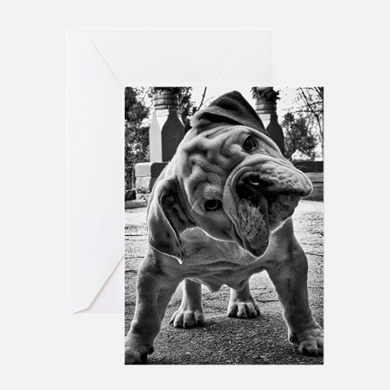 Dudley English Bulldog Greeting Cards