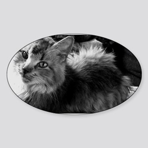 norwegian forest cat bw pic Sticker