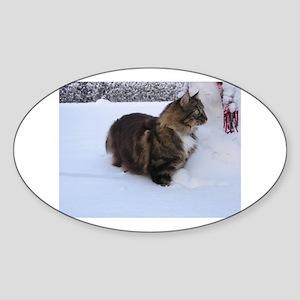 norwegian forest cat in snow Sticker