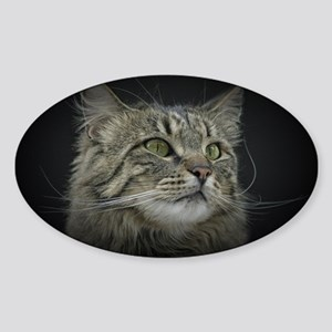norwegian forest cat Sticker