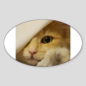 norwegian forest cat peeking Sticker