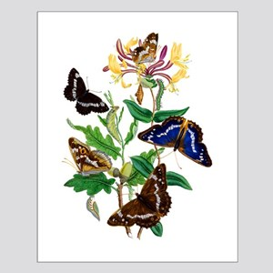 BUTTERFLIES AND HONEYSUCKLE Small Poster