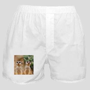 Meerkat_2014_1103 Boxer Shorts