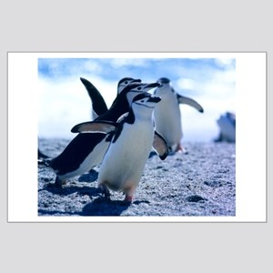 Cute Penguins Large Poster
